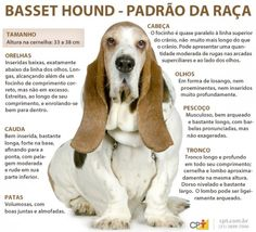Padrão da raça Basset Hound Animals Kissing, Animals And Pets, Pet Dogs, Dog Cat, Pet Paradise, Basset Hound, Dog Behavior, Animal Design, Pet Shop