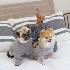 Mid-week all-day sleepovers is how we roll  #sleepallday #matchingpajamas #squad - @itsmoosethepug @iggyjoey @pompomchewy