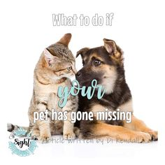 What to do if your pet has gone missing Husky Rescue, Emergency Vet, Pet Vet, Feral Cats, Has Gone, Poster On, How To Take Photos, Beautiful Day, Your Pet