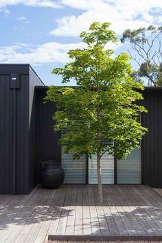 Flinders Garden - Ben Scott Garden Design