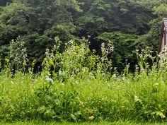 Ein Treffpunkt für Insekten und eine Augenweide für den Menschen. #gartenzeit #blumenwiese #bienensterben #naturschutz