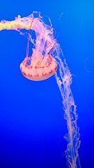 DSCF3404 #Aquarium #FishTank Monterey Bay Aquarium, Fish Tank, Fishbowl, Aquarium, Aquarium Fish Tank, Water Tank, Aquariums, Aquarius