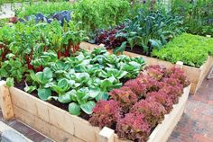 The secret to productive garden lies in the outset of several activities. The following 10 tips will help you to create a more productive and less maintenance vegetable garden.