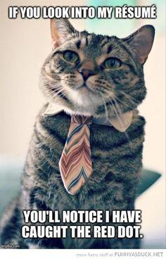 Job interview cartoons - Pesquisa Google