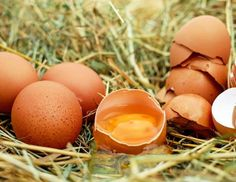 Two fathers and two sons went out for breakfast. In total, they ate three eggs and each person prese... - Image Pixabay