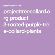 projecttreecollard.org product 3-rooted-purple-tree-collard-plants