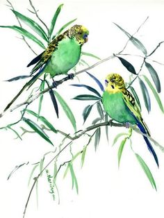 size: Stretched Canvas Print: Parakeets Budgies by Suren Nersisyan : Using advanced technology, we print the image directly onto canvas, stretch it onto support bars, and finish it with hand-painted edges and a protective coating. Watercolor Horse, Watercolor Paintings, Watercolor Ideas, Watercolours, Bird Artwork, Budgies, Parrots, Painting Edges, Stretched Canvas Prints
