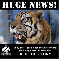 Anyone think tigers belong in truckstops? We don't either! FREE TONY THE TIGER! aldf.org