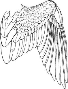 260 best how to draw wings images in 2019 BBQ Wings i want to get some hawk wing wings and incorporate hawkins in it somewhere