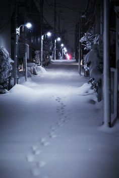 Snowy night in Tokyo_ Japan