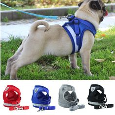 Breathable Mesh Small Dog Pet Harness and Leash Set Puppy, Cat. Vest Harness Collar for Chihuahua, Pug, Bulldog, Cat. Online shopping for Dog Collars with free worldwide shipping Large Dogs, Small Dogs, Dog Vest, Buy Pets, Small Puppies, Dog Harness, Chihuahua, Pugs, Pet Dogs