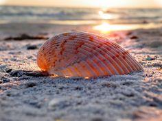 Sunset on a sea shell