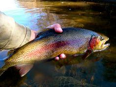 Fly Fish the Western North Carolina Fly Fishing Trail