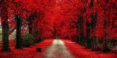 Autumn Bloody by Dominik Marciszewski