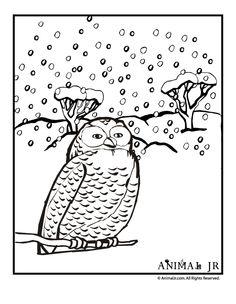 Kleurplaten Vogels In De Winter.20 Beste Afbeeldingen Van Winter Vogels Kleurplaten Winter