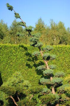 BONSAI PARK tree shrub plant the most beautiful Japanese Garden Planting Shrubs, Bonsai Plants, Most Beautiful, Japanese, Nature, Gardens, Japan Garden, Green, Naturaleza