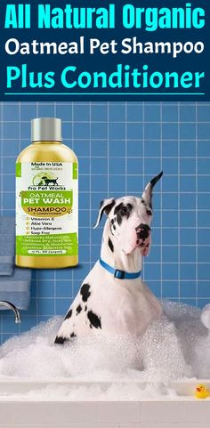 Our Oatmeal Dog Shampoo And Conditioner is recommended by Vets and Specially formulated for pets with allergies to food, grass and flea bites. Oatmeal Shampoo, Cat Shampoo, Shampoo And Conditioner, Dog Smells, Natural Vitamin E, Flea Treatment, Dog Eyes, Dry Skin, Biodegradable Products