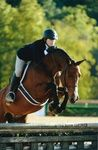 Cosa Nostra - Warmblood Other - Hunter Horse for Sale