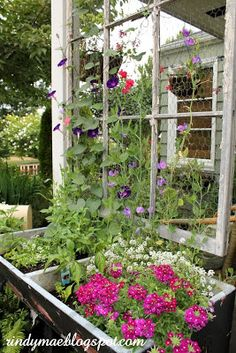 Rindy Mae: Planted tubs and window trellis - this is beautiful!