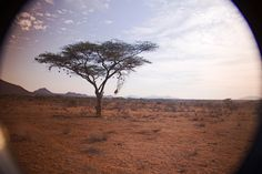 Acacia Tree, Escarpment on Horizon, Samburu National Park