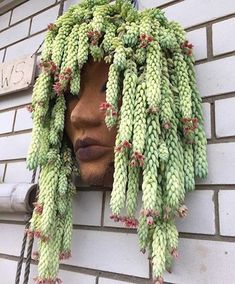 What a clever use of trailing Succulents