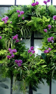 orchid wreath....
