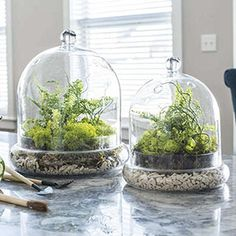 Complete Cloche Terrarium Kit | Spring Hill Nurseries