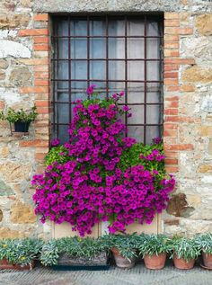 1156 Blooming Floral Window Backdrop