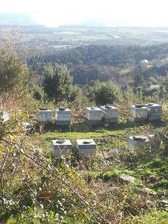 Mon rucher en Corse