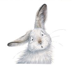 Kristin Makarius — 'Albert the Snowshoe Hare' Gicleé Print – Hase Bunny Painting, Bunny Drawing, Bunny Art, Rabbit Pictures, Art Pictures, Photos, Watercolor Animals, Watercolor Paintings, Snowshoe Hare