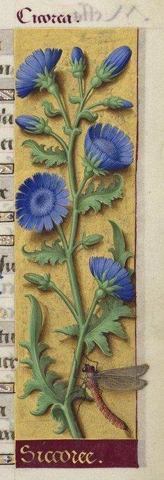 Мобильный LiveInternet Средневековые миниатюры с растениями   людмила_ив - Дневник людмила_ив  