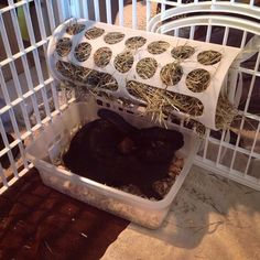 Great DIY Ideas for Your Pet - Preloved UK - Rabbit Hutches: Outdoor & Indoor Rabbit Hutche Models Bunny Cages, Rabbit Cages, Rabbit Toys, Rabbit Treats, Rabbit Feeder, Hay Feeder, Meat Rabbits, Raising Rabbits, Rabbit Enclosure