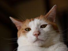 写真家・有高唯之さんと3匹の猫軍団による暮らし連載「逗子猫日記」。