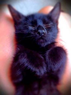 13 Great Reasons Why Black Cats are Awesome!