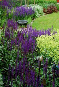 Salvia blu e Alchemilla Moss Garden, Blue Garden, Garden Landscape Design, Garden Landscaping, Lakeside Garden, Growing Gardens, Garden Cottage, Garden Borders, Salvia