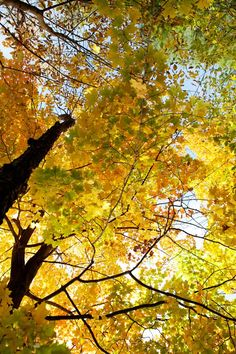 Autumn is in the air this week in Northern New England, even though it's mid-August!