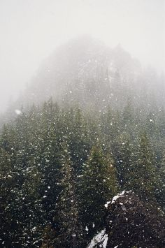 .winter in the forest