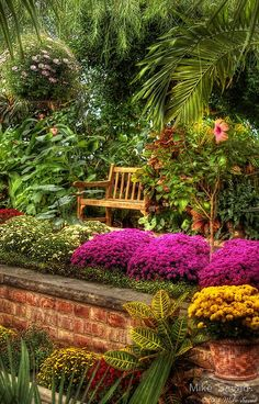 Elevated garden view Beautiful gorgeous pretty flowers