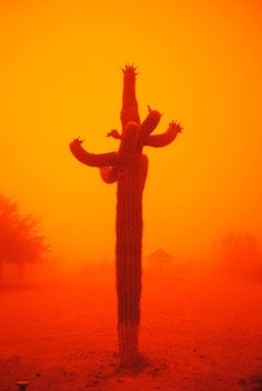 arizona-sky:    chelslintz:    A dust storm in Arizona.