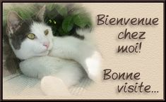 Cartes  Postales  COCCINELLES Mr Cat, Image Chat, Gif Animé, Cat Love, Minions, Cute Animals, Kitty, Birds, Pets