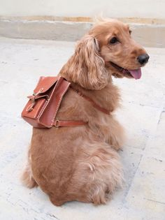Personalized Dog Backpack - Leather - Hand Stitched.