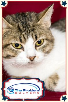 This also happens to be my photo :-) --Meet Scarlet a cat up for adoption at the Humane Society of Greater Dayton. Every time her photo is repinned The Problems Solvers will donate a dollar to the Humane Society. #cat #animals