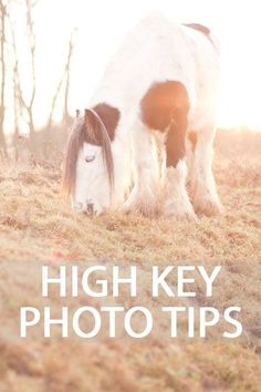 Photography Tips for taking high key style photos where the image is very bright overall, often giving an ethereal and dreamy feel, using natural or artificial light.
