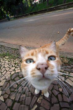 #cat #nose