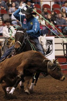 Patrick Dove/Standard-Times Cesar de la Cruz chases the heels of a steer Saturday afternoon during the team roping competition at the final performance of the 80th San Angelo Stock Show & Rodeo.