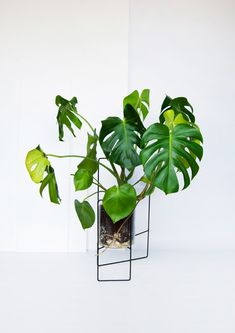 April plant stand /