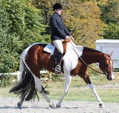 DreamHorse.com Horse ID: 1791606 - A Gorgeous Investment
