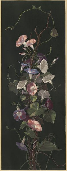 File name: 07_11_001035  Title: Morning Glories  Creator/Contributor: Hardy, Annie Eliza, 1839-1934 (artist); L. Prang & Co. (publisher)  Date issued:   Copyright date: 1877  Physical description note:   Genre: Chromolithographs; Still life prints  Location: Boston Public Library, Print Department  Rights: No known restrictions
