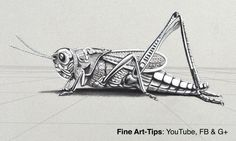 How to Draw a Metalic Grasshopper in 3D - Chrome Cricket #drawing #art #FineArtTips #grasshopper #cricket #metallic #artistleonardo #LeonardoPereznieto #tutorial  Take a look to my book here: http://www.artistleonardo.com/#!ebooks-english/cswd