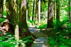 Inspiring you to take your journey. Washington, Journey, Plants, The Journey, Plant, Washington State, Planets